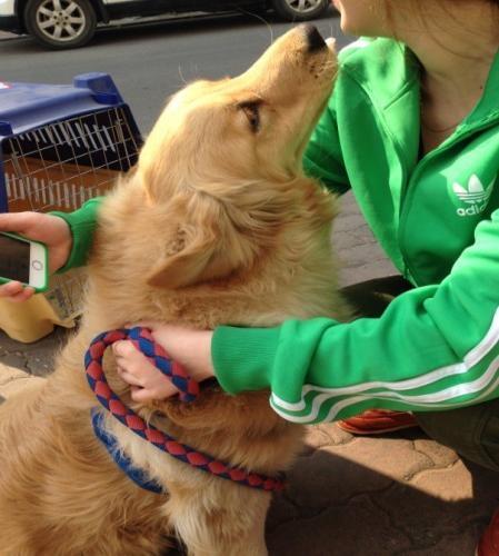 起始港:北京@ 目的港:澳大利亞悉尼@ 品  名:寵物狗@
